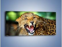 Obraz na płótnie – Jaguar z pazurem – jednoczęściowy panoramiczny Z184