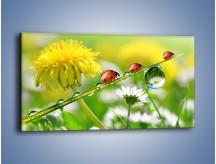 Obraz na płótnie – Wędrówka biedroneczek – jednoczęściowy panoramiczny Z190