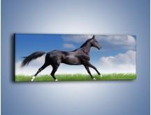 Obraz na płótnie – Dziki koń w biegu – jednoczęściowy panoramiczny Z194
