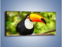 Obraz na płótnie – Kolorowy dziób tukana – jednoczęściowy panoramiczny Z195