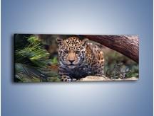 Obraz na płótnie – Jaguar w gotowości – jednoczęściowy panoramiczny Z198