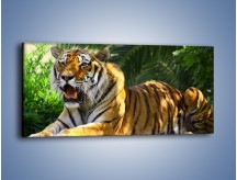 Obraz na płótnie – Cała duma tygrysa – jednoczęściowy panoramiczny Z199