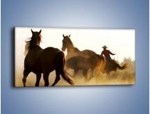 Obraz na płótnie – Cowboy wśród koni – jednoczęściowy panoramiczny Z206