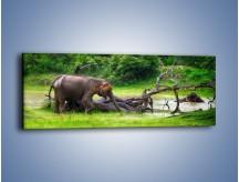 Obraz na płótnie – Kąpiel ze słoniem – jednoczęściowy panoramiczny Z216