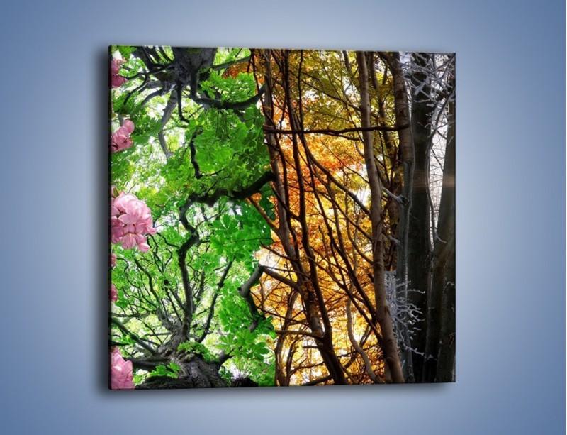 Obraz na płótnie – Drzewa w różnych kolorach – jednoczęściowy kwadratowy KN037