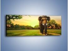 Obraz na płótnie – Lekki krok słonia – jednoczęściowy panoramiczny Z218