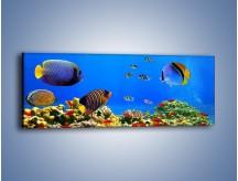 Obraz na płótnie – Kolory tęczy pod wodą – jednoczęściowy panoramiczny Z220