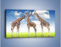 Obraz na płótnie – Poranna gimnastyka z żyrafą – jednoczęściowy panoramiczny Z226