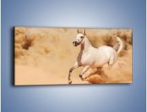 Obraz na płótnie – Klacz w tumanach piasku – jednoczęściowy panoramiczny Z233