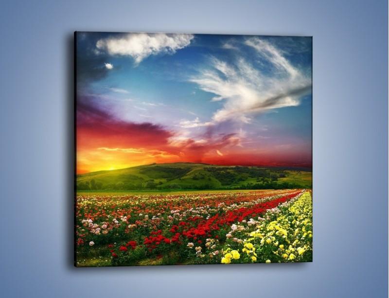 Obraz na płótnie – Uprawy kolorowych róż – jednoczęściowy kwadratowy KN060