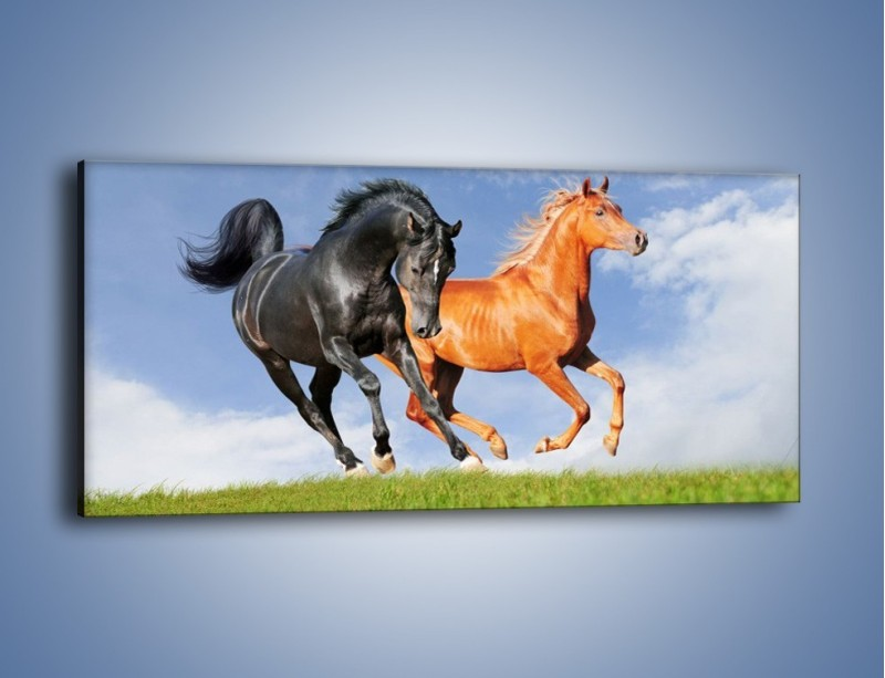 Obraz na płótnie – Czarny rudy i koń – jednoczęściowy panoramiczny Z241