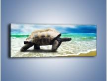 Obraz na płótnie – Jak tu nie kochać żółwi – jednoczęściowy panoramiczny Z251