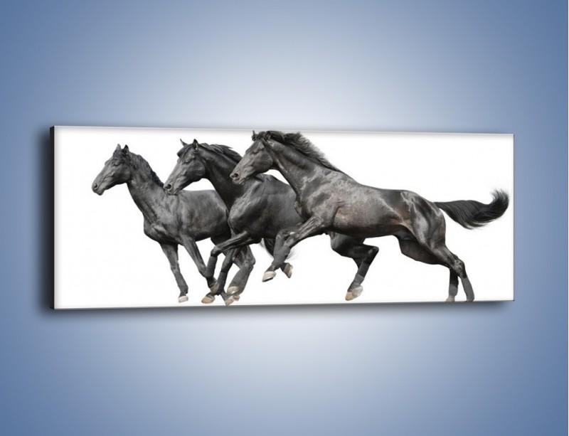 Obraz na płótnie – Kadrowe ujęcie mustanga – jednoczęściowy panoramiczny Z253