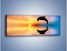 Obraz na płótnie – Delfin i jego odbicie – jednoczęściowy panoramiczny Z268