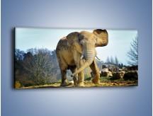 Obraz na płótnie – Ciężkie życie słonia – jednoczęściowy panoramiczny Z273