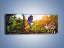 Obraz na płótnie – Kolorowa papuga w locie – jednoczęściowy panoramiczny Z280