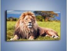 Obraz na płótnie – Dostojny lew na sawannie – jednoczęściowy panoramiczny Z282