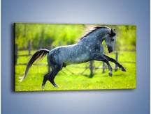 Obraz na płótnie – Koń w zagrodzie wiejskiej – jednoczęściowy panoramiczny Z289