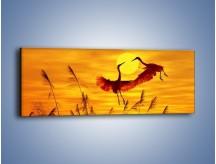 Obraz na płótnie – Czaple i zachód słońca – jednoczęściowy panoramiczny Z302