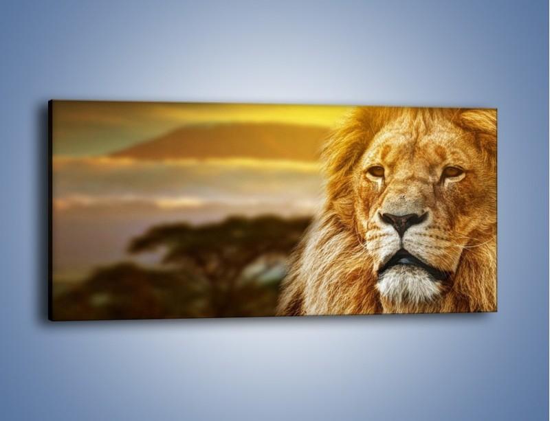 Obraz na płótnie – Dojrzały wiek lwa – jednoczęściowy panoramiczny Z303