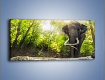 Obraz na płótnie – Słoń i mały wodospad – jednoczęściowy panoramiczny Z305