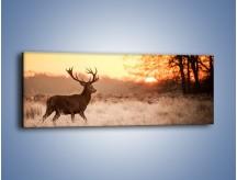 Obraz na płótnie – Jeleń szukający sarny – jednoczęściowy panoramiczny Z306