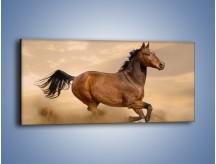 Obraz na płótnie – Koń który nie chce się zatrzymać – jednoczęściowy panoramiczny Z314