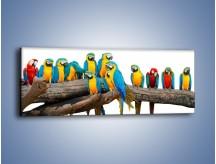 Obraz na płótnie – Kolorowe stado papug – jednoczęściowy panoramiczny Z326