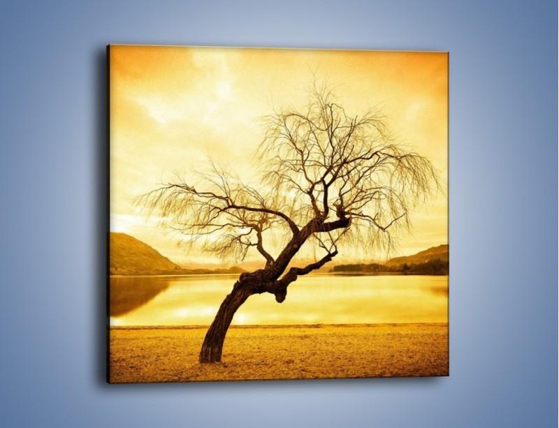 Obraz na płótnie – Pochylone drzewo w sepii – jednoczęściowy kwadratowy KN1033