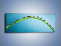 Obraz na płótnie – Mrówki na zielonym moście – jednoczęściowy panoramiczny Z336