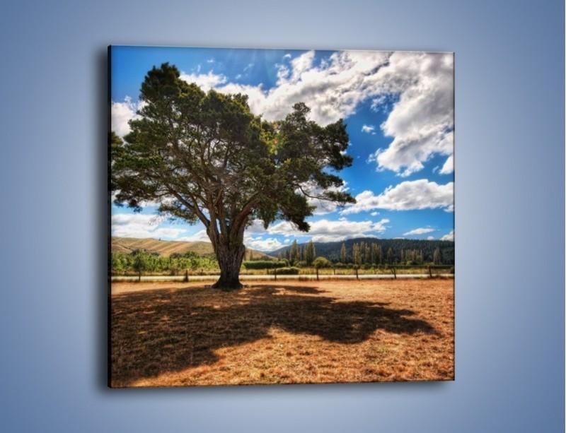 Obraz na płótnie – Cień pod rozłożystym drzewem – jednoczęściowy kwadratowy KN1037