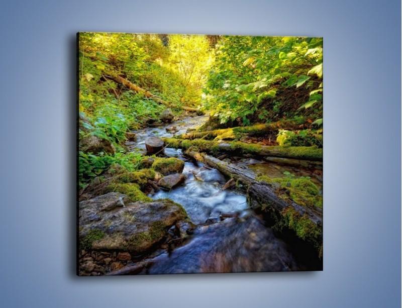 Obraz na płótnie – Drewno ścięte do wody – jednoczęściowy kwadratowy KN1059