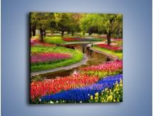 Obraz na płótnie – Aleje kolorowych tulipanów – jednoczęściowy kwadratowy KN1079