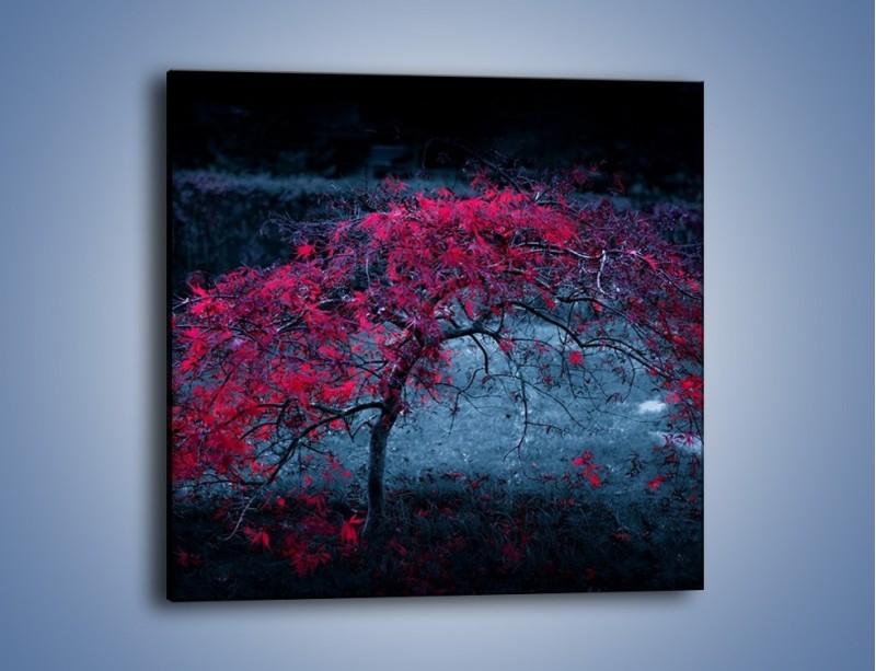 Obraz na płótnie – Czerwone płaczące drzewo – jednoczęściowy kwadratowy KN1101A