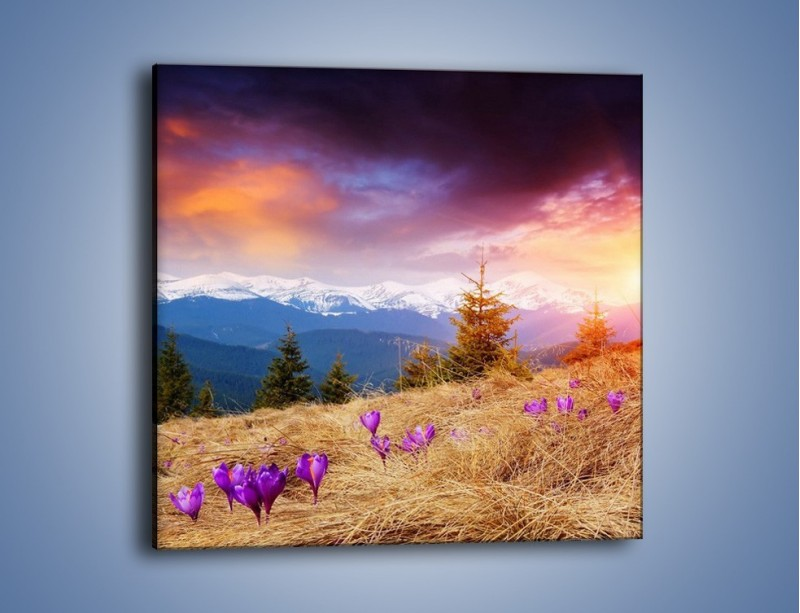 Obraz na płótnie – Przebiśniegi w górach – jednoczęściowy kwadratowy KN1126A