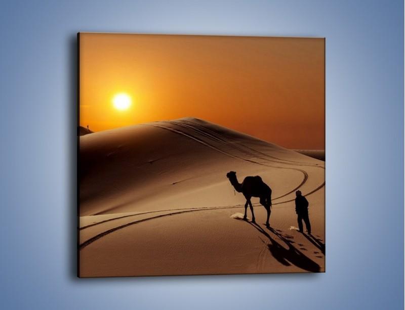 Obraz na płótnie – Człowiek wielbłąd i wydmy – jednoczęściowy kwadratowy KN1134A
