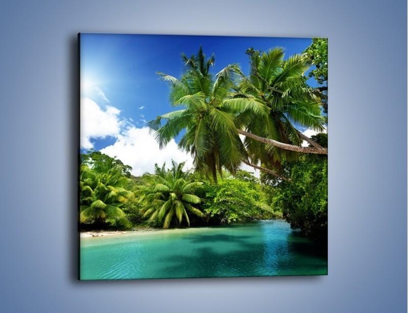 Obraz na płótnie – Rozłożone palmy i woda – jednoczęściowy kwadratowy KN1168A