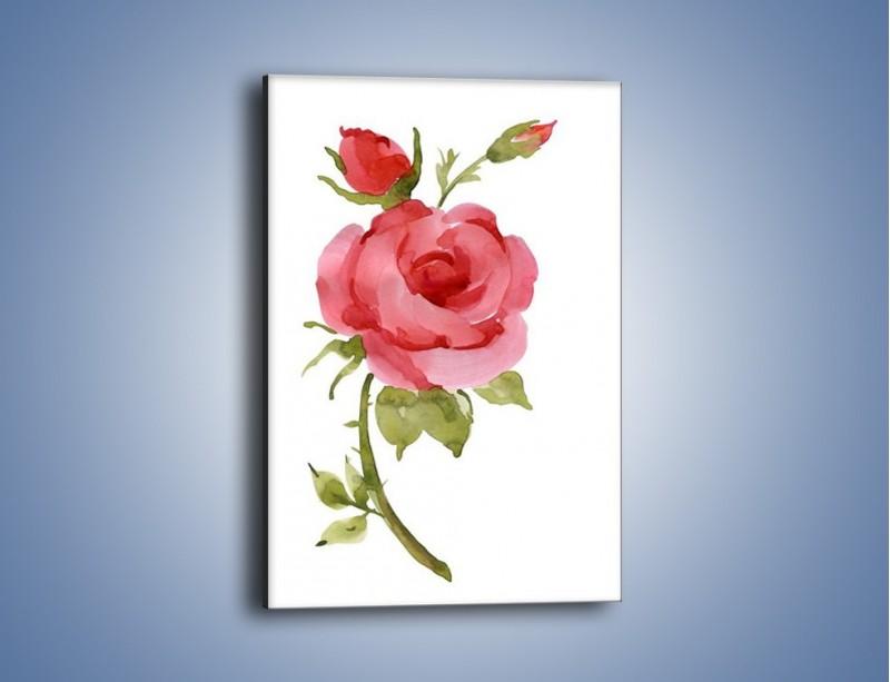Obraz na płótnie – Róża nie do końca rozwinięta – jednoczęściowy prostokątny pionowy GR501