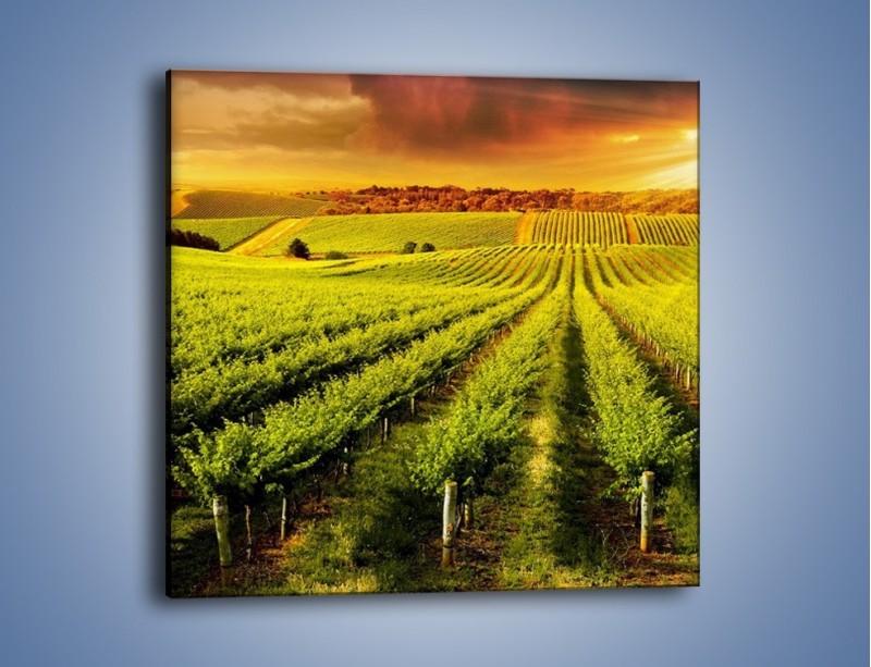 Obraz na płótnie – Plantacja w stronę słońca – jednoczęściowy kwadratowy KN1180A