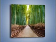 Obraz na płótnie – Bambusowy las – jednoczęściowy kwadratowy KN1187A