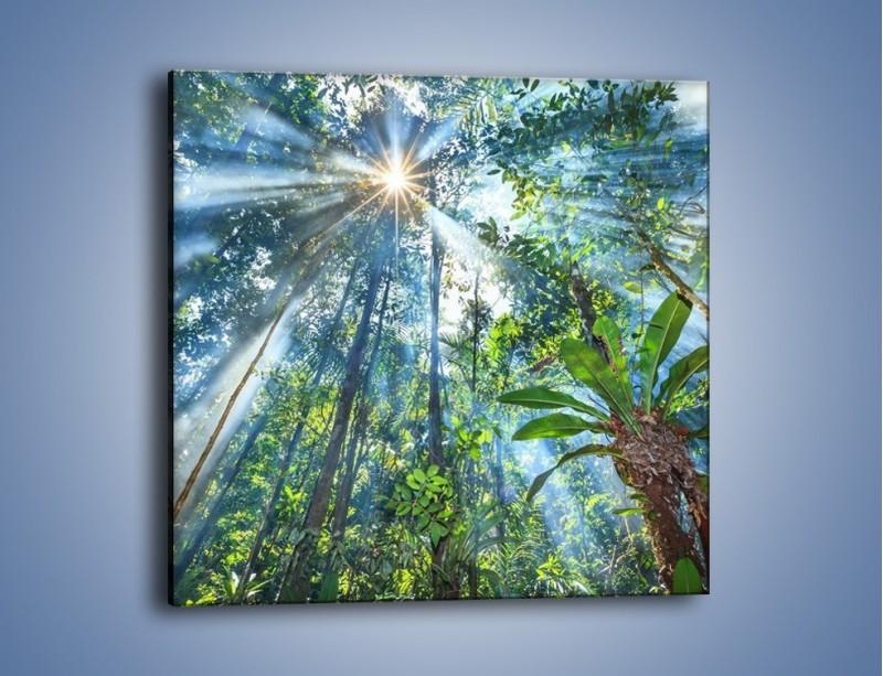 Obraz na płótnie – Dyzio marzyciel i drzewa – jednoczęściowy kwadratowy KN1189A