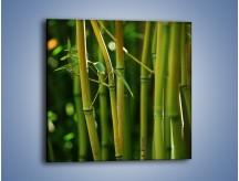 Obraz na płótnie – Bambusowe łodygi z bliska – jednoczęściowy kwadratowy KN118