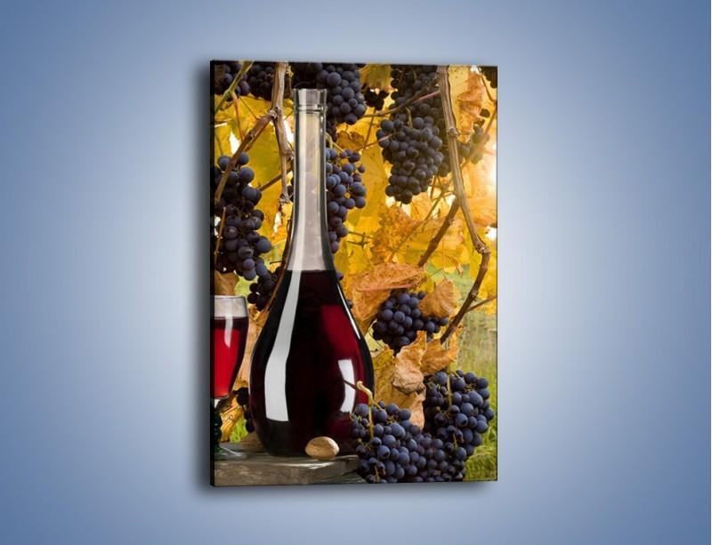 Obraz na płótnie – Wino wśród winogron – jednoczęściowy prostokątny pionowy JN007