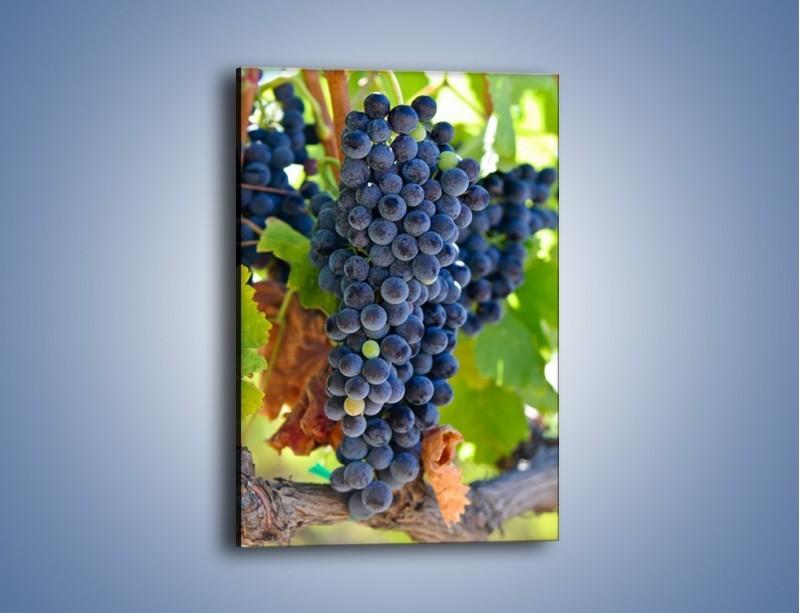 Obraz na płótnie – Wisząca kiść winogrona – jednoczęściowy prostokątny pionowy JN071