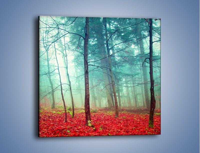 Obraz na płótnie – Drzewka na czerwonym dywanie – jednoczęściowy kwadratowy KN1222A