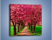 Obraz na płótnie – Aleja kwitnącej wiśni – jednoczęściowy kwadratowy KN1238A