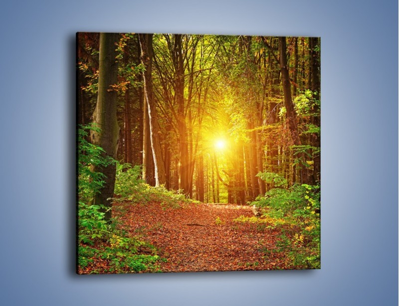 Obraz na płótnie – Polski krajobraz leśny – jednoczęściowy kwadratowy KN1257A