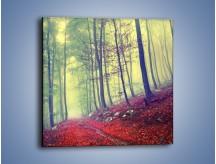 Obraz na płótnie – Bardzo wąską ścieżką leśną – jednoczęściowy kwadratowy KN1335A