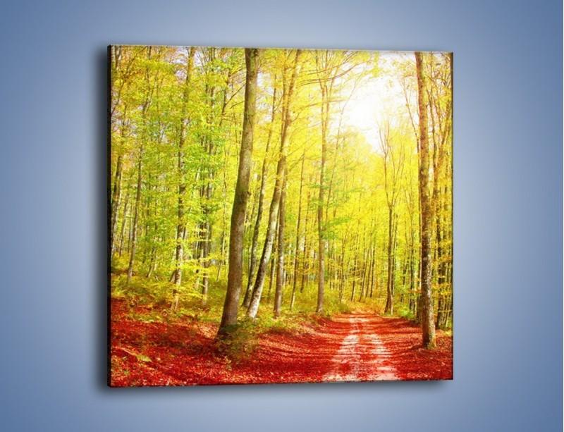 Obraz na płótnie – Brzózki liście i las – jednoczęściowy kwadratowy KN1345A