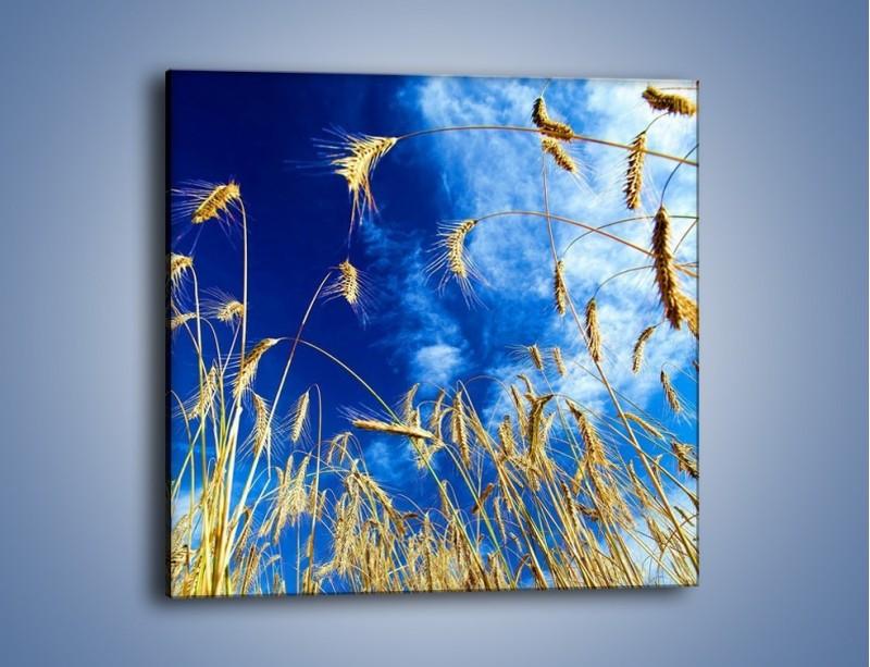 Obraz na płótnie – Zboże w niebie – jednoczęściowy kwadratowy KN139